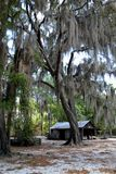 Old Southern Barn. An old barn under a Spanish moss covered oak Stock Images