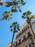 Old spanish houses with palm trees Stock Image