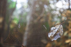 Old spider web Stock Photos