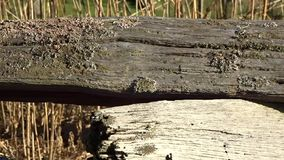 An old split-rail fence with Lichens in Grandview State Park, Wild Wonderful WV. A very old split-rail fence or log fence a type of fence constructed out of stock video footage