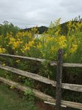 Old split rail fence by a meadow Royalty Free Stock Photo