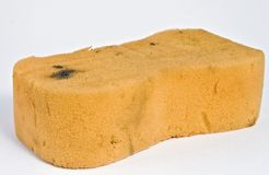 Old Sponge. Old Used Sponge Ready for Duty to Soak Water Royalty Free Stock Photography