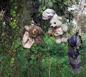 Old Spooky Dolls hanging in a tree in Mexico City Royalty Free Stock Photos