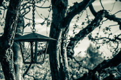 Old spooky lantern. Old lantern hanging off the tree Royalty Free Stock Photography