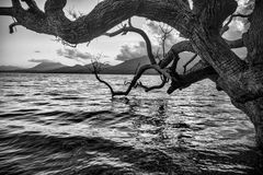 Old spooky tree.. Royalty Free Stock Photography