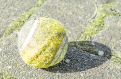 Old sport ball. Old sports ball on stones Stock Photography