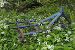 Old Spring Tooth Harrow among Ramsons Royalty Free Stock Photo