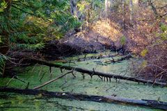 The old stagnant pond Stock Image
