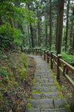 Old stair climbing steps in deep forest Stock Images