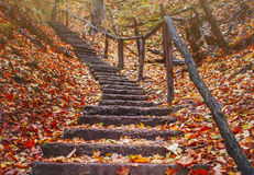 Old staircase in the autumn forest in the mountains Royalty Free Stock Photos