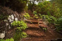 Old staircase in the dense green forest Stock Photography