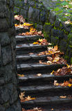Old staircase in the forest Stock Photo