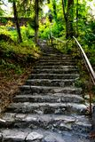 Old staircase in the forest royalty free stock photos