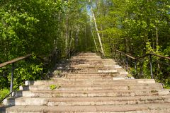 Old staircase in the forest leading up royalty free stock photography
