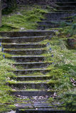 Old staircase partly covered with moss Stock Photos