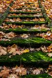 Old stairs with colorful autumn leaves. Selective focus stock photo