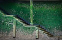 Old stairs covered with green vegetation Royalty Free Stock Image