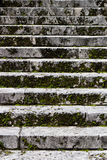 Old stairs covered in moss Stock Photography