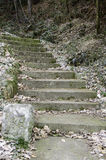 Old stairs in forest. royalty free stock photo