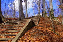 Old Stairs in the forest. Stairs in the woods, road of life, Steps Royalty Free Stock Photos