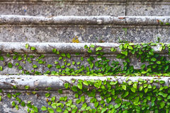 Old stairs in park Royalty Free Stock Photos