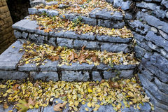 Old stairs in park covered with yellow maple leaves. Autumn conc Stock Image