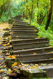 Old stairs in the park. Focused in the center Royalty Free Stock Photo