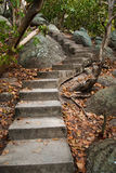 Old stairs and surrounding vegetation Stock Photography