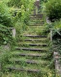 Old Stairway Covered by Greenery Stock Images