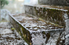 Old stairway. Stairs step old stairway artistic concrete moss mossy blur Stock Photography