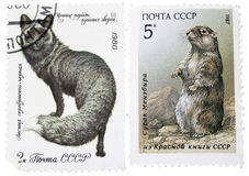 Old stamp with marmot and black fox Royalty Free Stock Images
