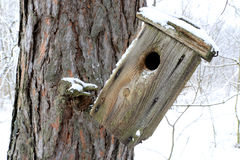 Old starling-house in forest Stock Photography