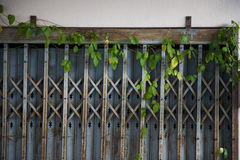 Old steel door closed and Ivy.  Texture pattern and background Stock Image