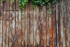 Old Steel door Stock Image
