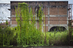 Old steel fence covered with ivy in front of wilderness house Royalty Free Stock Images