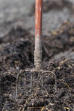 Old steel pitchforks in a pile of manure , fertilize fields Royalty Free Stock Image