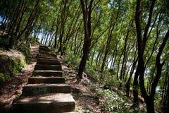 Old steps in forest. Old ascending or descending steps in forest  between trees Stock Images