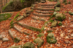 Old Steps in a Forest Stock Photo