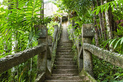 Old steps in rainforest jungle. Old mossy stone steps leading up in leafy green rain forest Royalty Free Stock Photography