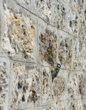 Old Stone Brick Wall Textured Background with a Bird Royalty Free Stock Images