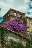 Old stone buildings with flowering trees and bindweed at Caceres. Old stone buildings with flowering trees and bindweed in a sunny day at Caceres. A cute and stock image