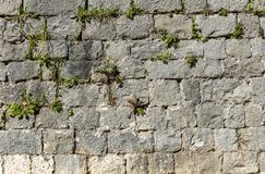 Old stone castle wall made of stone brick slabs. Ancient medieval fortified wall fence with green grass and moss texture pattern stock photography