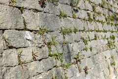 Old stone castle wall made of stone brick slabs. Ancient medieval fortified wall fence with green grass and moss texture pattern royalty free stock images