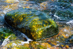 Old stone covered with algae in shallow water at the se Royalty Free Stock Photos
