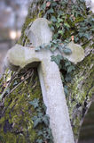 Old stone cross overgrown with ivy and moss Royalty Free Stock Photos