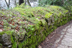 Old stone fence covered with moss Stock Photo