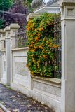 Old stone fence with decorative plants yellow. Old stone fence with decorative plants Stock Photos