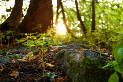 Old stone on ground in forest Royalty Free Stock Photo