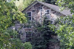 An old stone house covered in climbing vines !. The back of this old stone house has wonderful climbing vines and vegetation covering it Royalty Free Stock Photo
