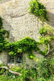 Old stone house with green trees ivy, England Royalty Free Stock Photos
